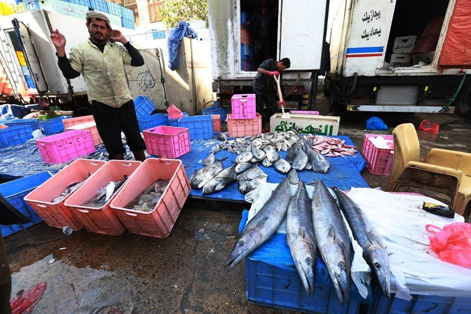 """""""البُليْلي"""" .. أشهر أسواق بيع السمك في صنعاء اليمنية - aa_picture_20141111_3751924_web"""