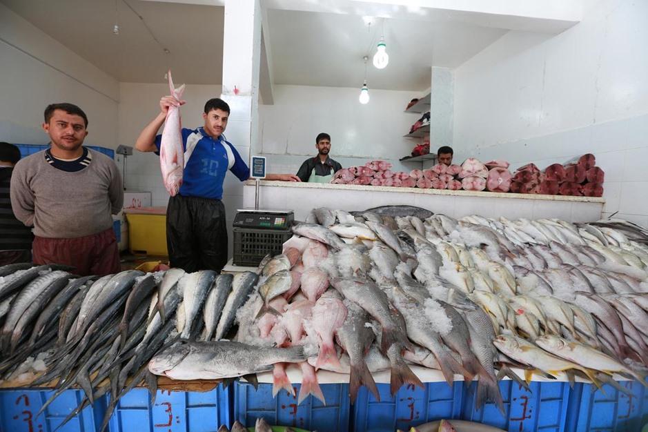 """""""البُليْلي"""" .. أشهر أسواق بيع السمك في صنعاء اليمنية - aa_picture_20141111_3751925_web"""
