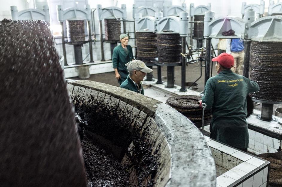 توقع ارتفاع صادرات زيت الزيتون بتونس - 03- توقع ارتفاع صادرات زيت الزيتون بتونس - الاناضول