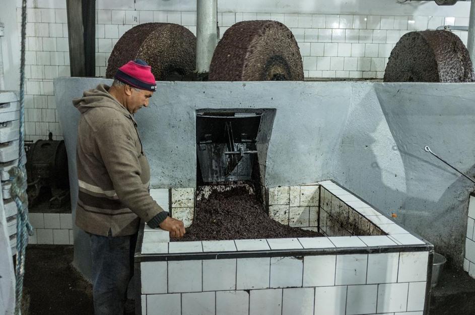 توقع ارتفاع صادرات زيت الزيتون بتونس - 11- توقع ارتفاع صادرات زيت الزيتون بتونس - الاناضول