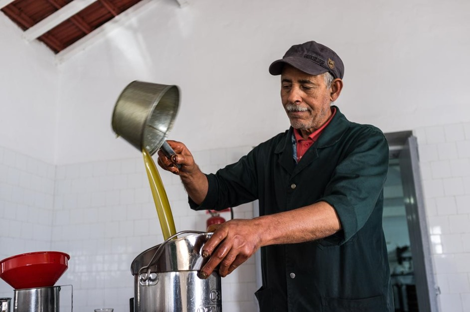 توقع ارتفاع صادرات زيت الزيتون بتونس - 14- توقع ارتفاع صادرات زيت الزيتون بتونس - الاناضول