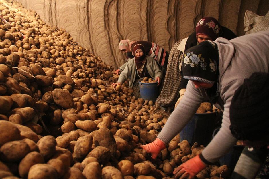 """ثلاجات طبيعية في """"كابادوكيا"""" التركية لحفظ الخضراوات - aa_picture_20140201_1489558_web"""