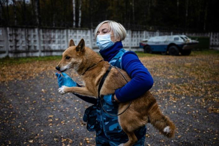 كلاب هجينة في روسيا لرصد الإصابات بكورونا
