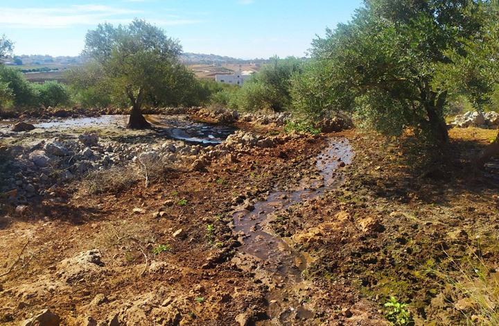 MEE: مياه المستوطنات العادمة تدمر موسم الزيتون في الضفة
