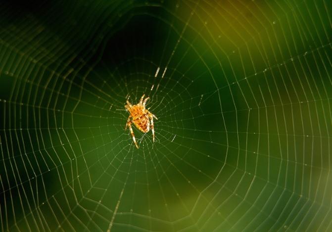 علماء ينتجون خيوط عناكب صناعية.. كيف ستستخدم؟