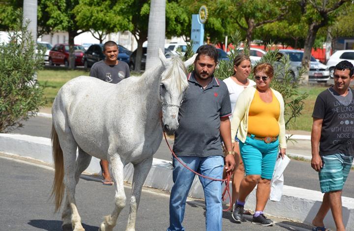 حصان يشيّع صاحبه ويحتضن تابوته في البرازيل (صور)