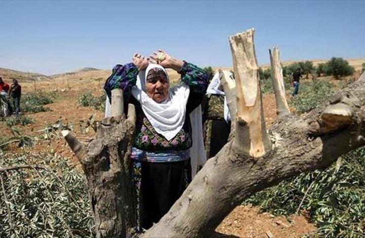 الاحتلال يقتلع ويصادر آلاف الدونمات وأشجار الزيتون بالضفة