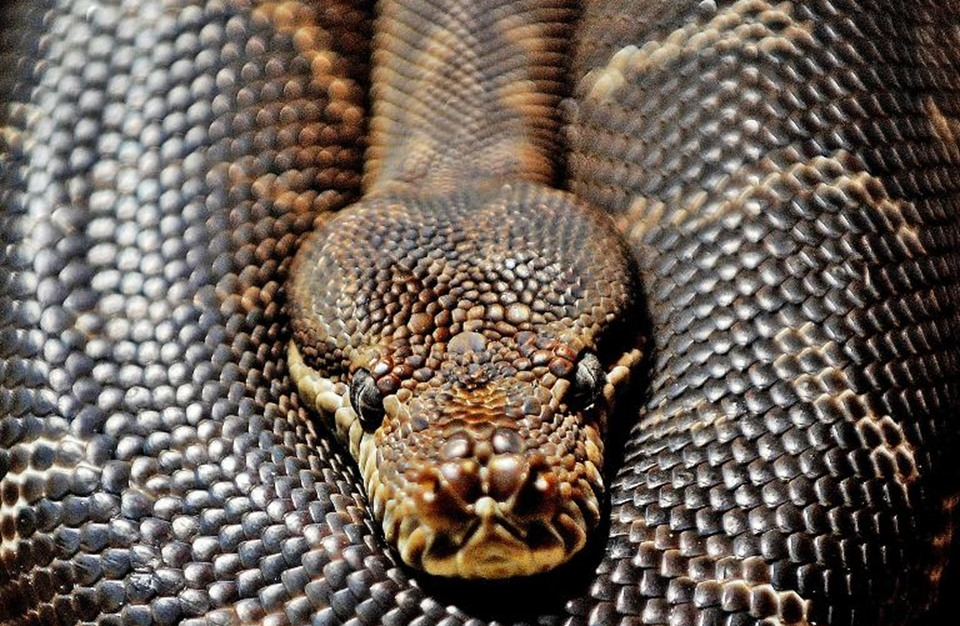 حيوانات قد تؤدي لدغتها أو عضتها لمرض خطير أو الموت (صور)