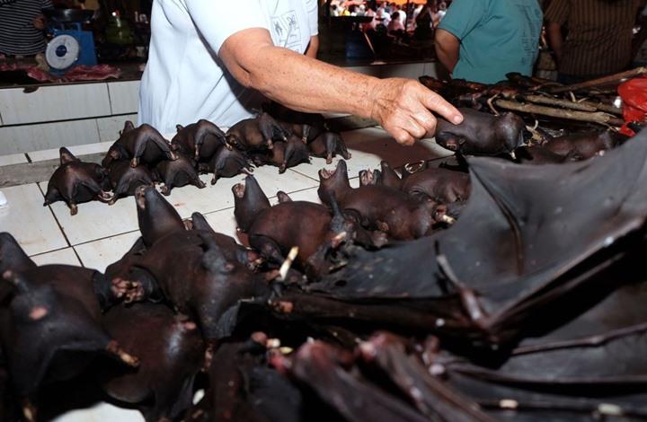 """رغم مخاوف """"كورونا"""".. مبيعات مرتفعة للحم الخفاش بإندونيسيا"""