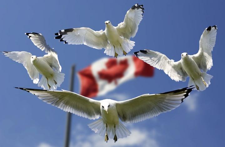كندا تعتذر وتعوض ثلاثة عرب تعرضوا للتعذيب في سوريا
