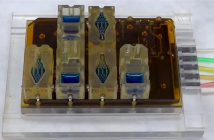 نموذج للجهاز التناسلي للمرأة سيساعد في معالجة العقم