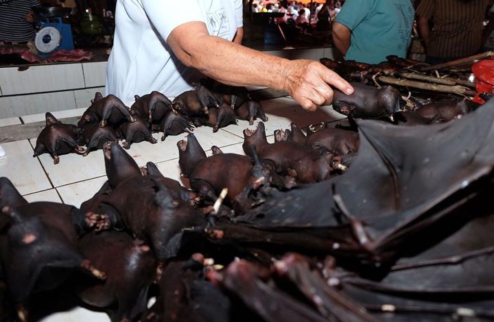 أسواق صينية تعود للحياة.. وتواصل بيع خفافيش وكلاب
