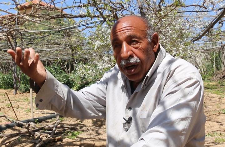 في يوم الأرض.. مزارع فلسطيني: لن نترك أرضنا (شاهد)