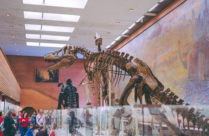 اكتشاف حفرية لأضخم ديناصور من العصر الطباشيري