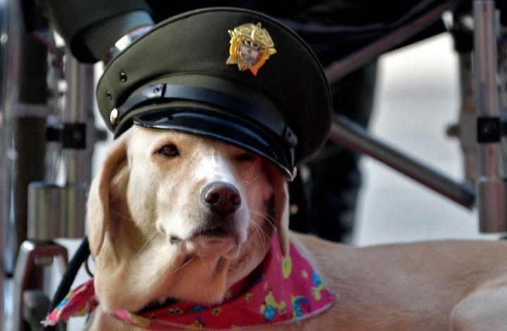 تصرف سيئ لكلب بايدن يتسبب بترحيله من البيت الأبيض