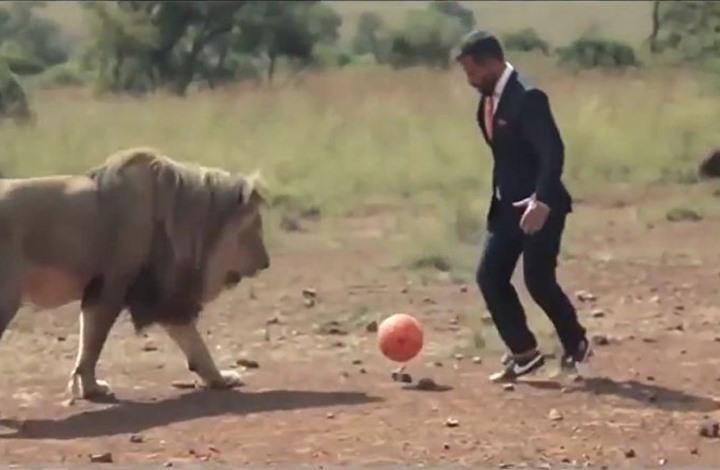مباراة لكرة القدم بين شاب ومجموعة أسود (فيديو)