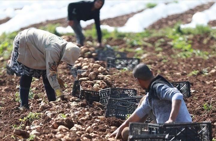 """انتشار """"كورونا"""" يجبر فلسطينيين على الزراعة بمنازلهم"""
