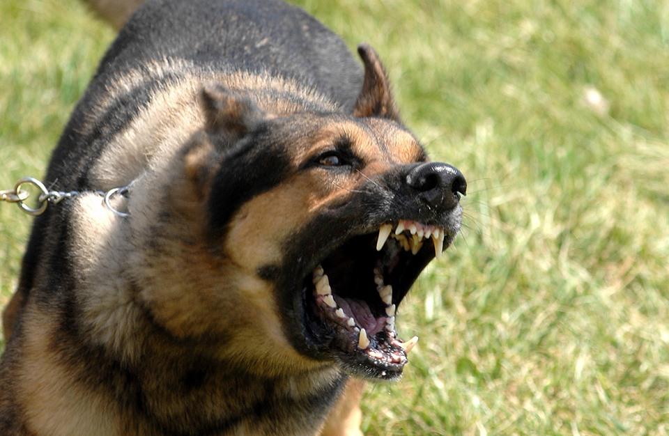حملة للتضامن مع كلب مغربي تعرض لاعتداء وحشي