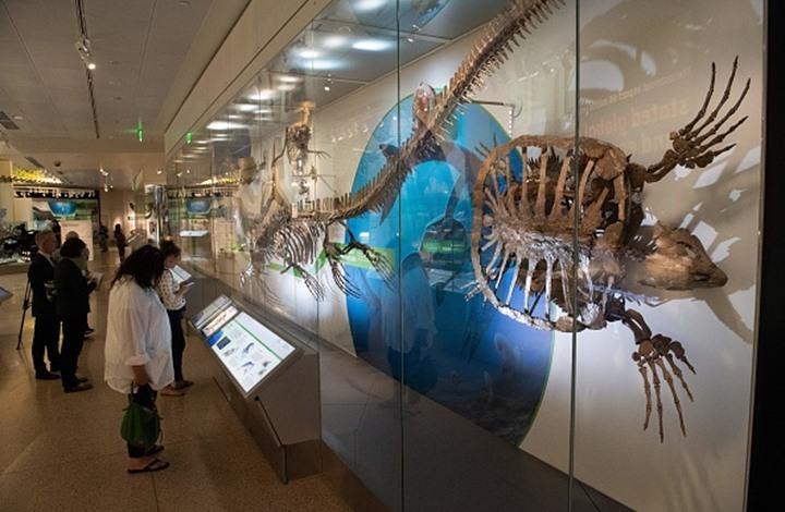تعرف على حيوانات غريبة انقرضت قبل ملايين السنين (إنفوغراف)