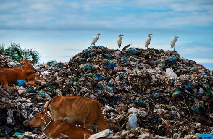النفايات الصلبة.. صداع يؤرق الدول المنتجة والمستهلكة معا