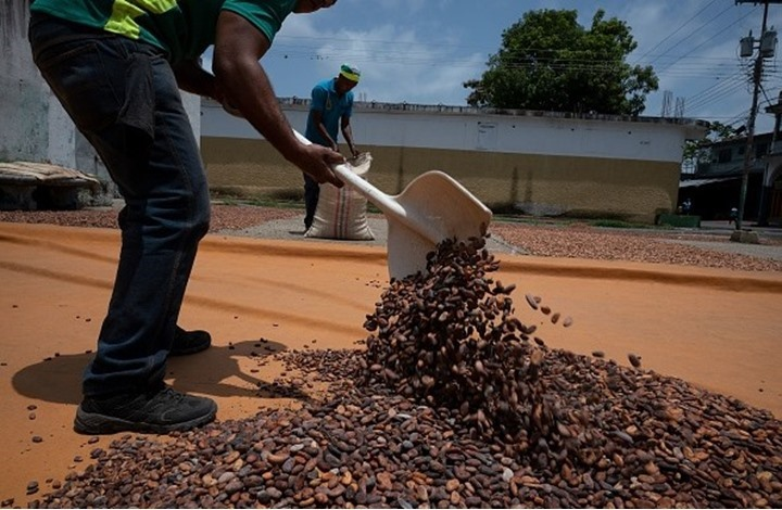 """ساحل العاجل تطلق مشروعا لإنتاج الكهرباء من """"الكاكاو"""""""
