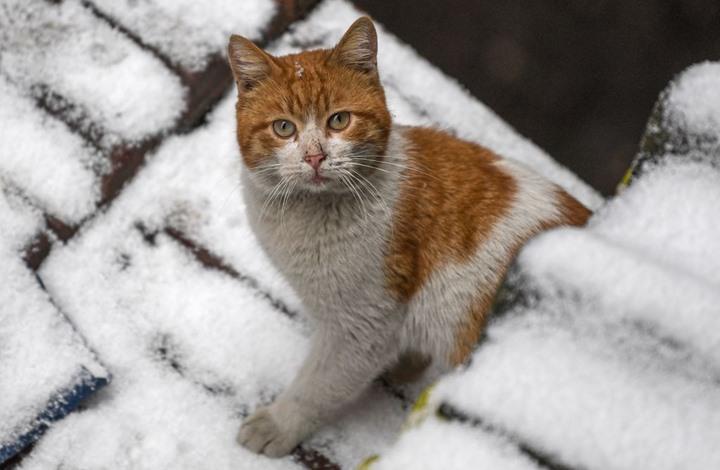 مجلة أمريكية: لماذا تكره القطط الماء؟