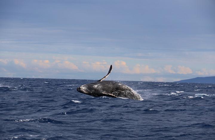 حيوان بحري يبهر العلماء بسرعة شفائه من الجروح الخطرة