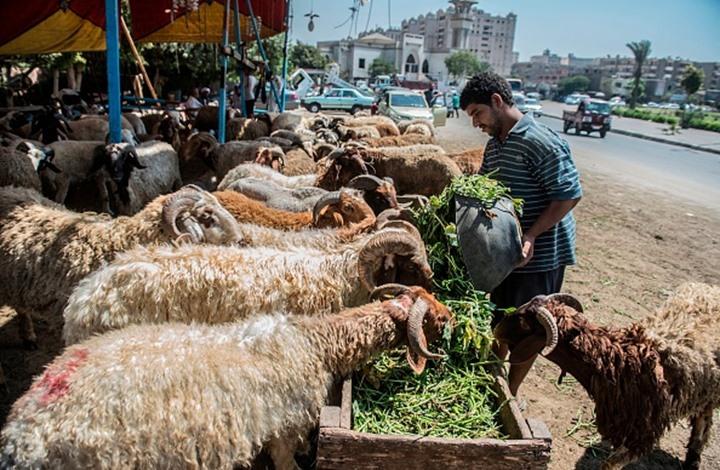كيف تأثرت أسواق الأضاحي في مصر بإجراءات مواجهة كورونا؟