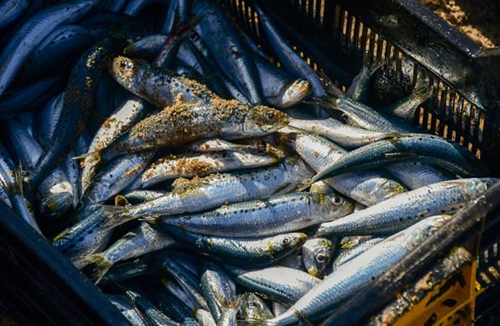 تغير المناخ سيؤثر على حرارة البحار و ستتأثر الأسماك بنسبة 60%