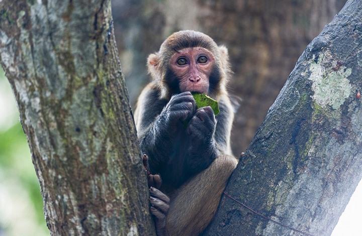 """أول حالة وفاة بالصين متأثرة بإصابتها بالفيروس """"القردي"""""""