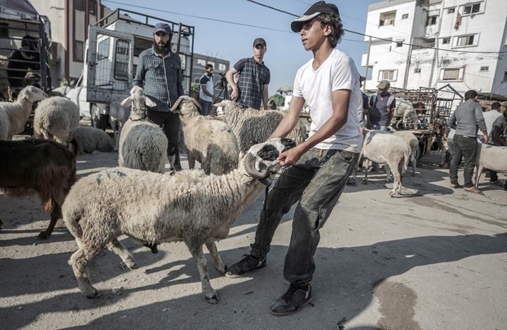 ارتفاع أسعار الأضاحي بغزة في أول عيد بعد العدوان (صور)
