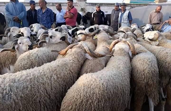 بمناسبة عيد الأضحى.. وزير بالمغرب يمنح صغار موظفيه هدية