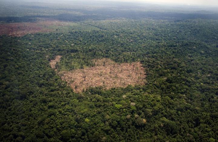 تعرف على شجرة ساهمت في إنقاذ ملايين البشر