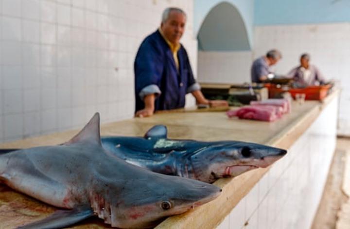 الغارديان هكذا دخل سمك القرش على قائمة طعام التونسيين