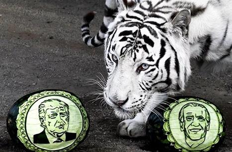 """حديقة حيوانات روسية """"تتدخل"""" بالانتخابات الأمريكية (صور)"""