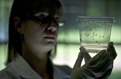 """هل يمكن لـ""""زيكا"""" أن يقتل خلايا سرطان المخ؟"""