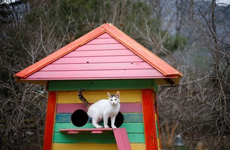 """قرية القطط.. """"فلل"""" وبرك سباحة ووسائل للترفيه (صور)"""