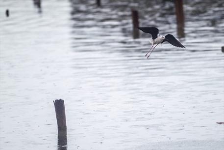 طيور النورس في تونس تبحث عن مأكل لها تحت زخات المطر - 03-  طيور النورس في تونس تبحث عن مأكل لها تحت