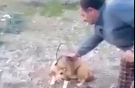 أردني يحرق كلبا ويثير جدلا في مواقع التواصل (شاهد)