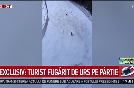 مثير.. دب يطارد متزلجا وكاد ينهي حياته (شاهد)