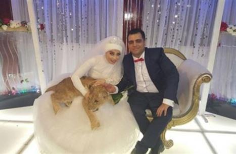 عروس مصرية تصر على حضور أسد ليلة زفافها (صور)