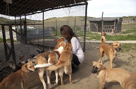 """مغربية تهدي الحيوانات الضالة """"محمية"""" طبيعية (شاهد)"""