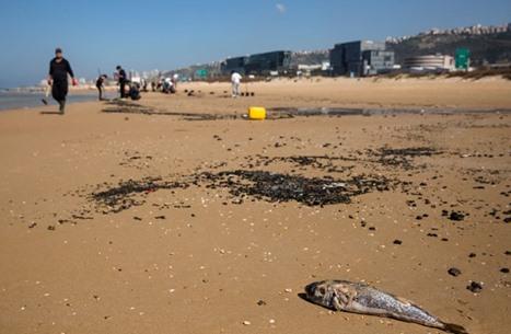 وزيرة إسرائيلية تحمّل إيران مسؤولية تلوث الشواطئ
