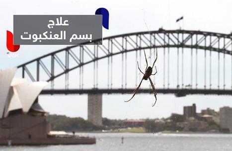 سم العنكبوت الأسترالي يقي من ضرر السكتات الدماغية