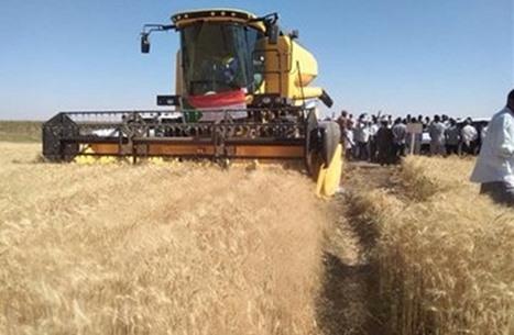 السودان يعلن عن سعر جديد لشراء القمح المحلي (صور)