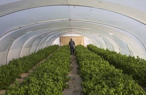 صحيفة: الإمارات توجه ضربة للقطاع الزراعي الأردني