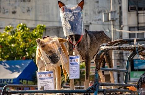 طبيب لبناني يطمح لمواجهة كورونا بواسطة كلاب مدربة