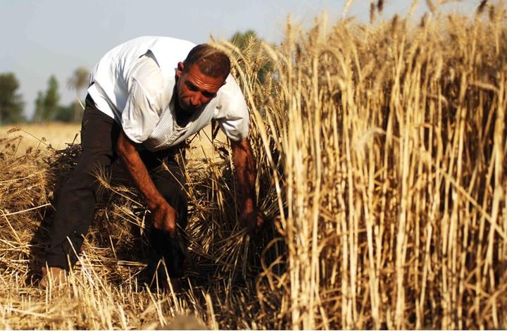 لماذا ترتفع أسعار الغذاء عربيا رغم انخفاضها عالميا؟