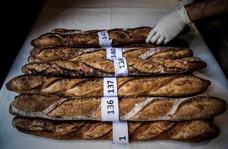 خمسة أساطير عن الخبز... صحيحة أم خاطئة؟