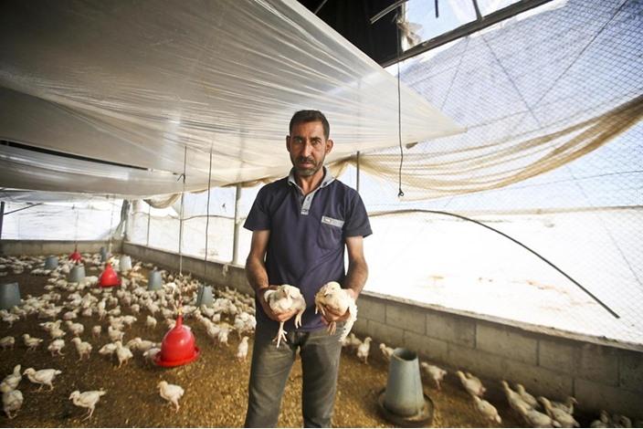 خشية من انتشار انلفونزا الطيور بغزة - 04- خشية من انتشار انلفونزا الطيور بغزة - الاناضول